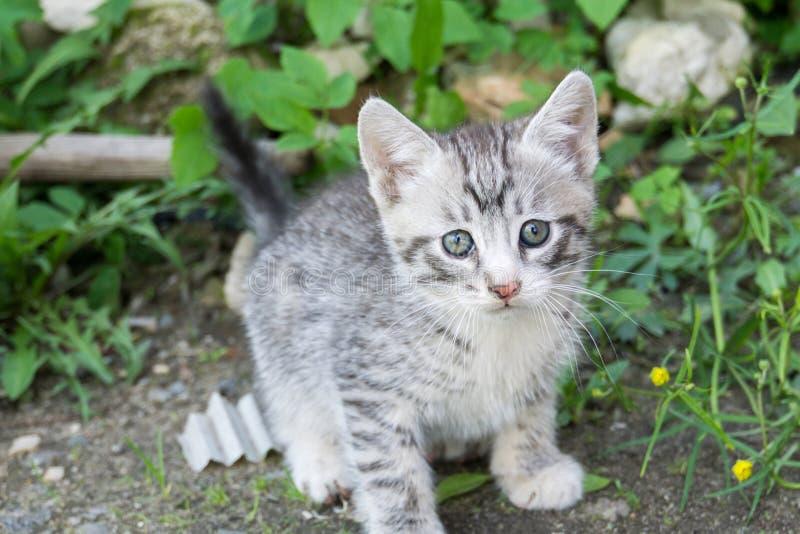 Gatito gris lindo imagenes de archivo