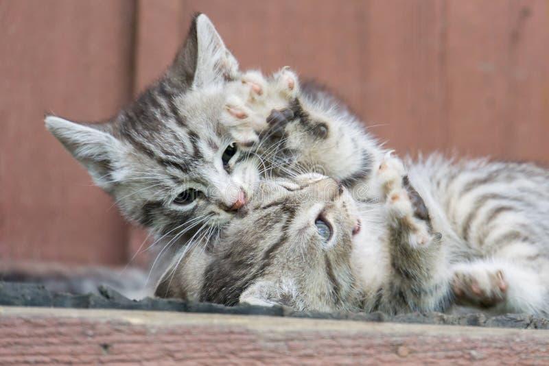 Gatito gris lindo imagen de archivo