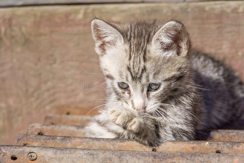 Gatito gris lindo imágenes de archivo libres de regalías