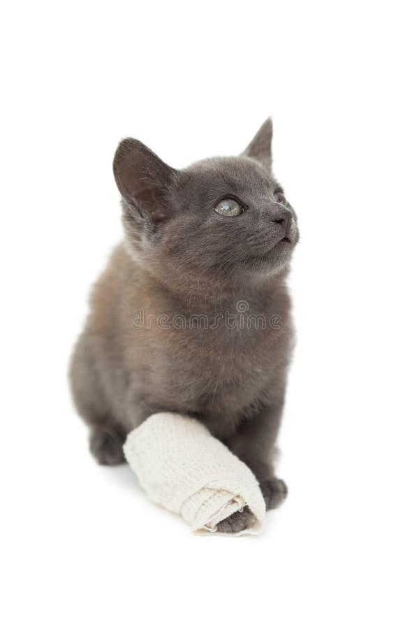 Gatito gris lindo con un vendaje en su pata imagen de archivo libre de regalías