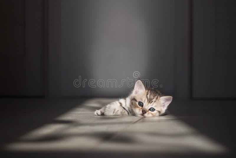 Gatito gris que miente en un piso ligero en el sol fotos de archivo