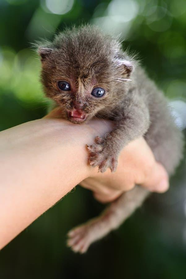 Gatito gris recién nacido fotografía de archivo libre de regalías