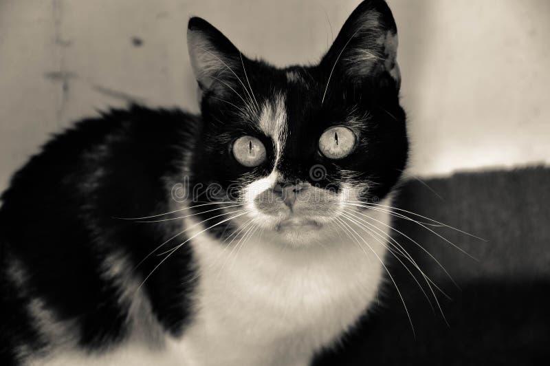 Gatito hermoso fotografía de archivo