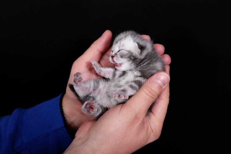 Gatito hermoso del bebé imagen de archivo libre de regalías