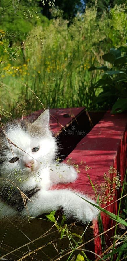 Gatito jugando afuera fotos de archivo libres de regalías