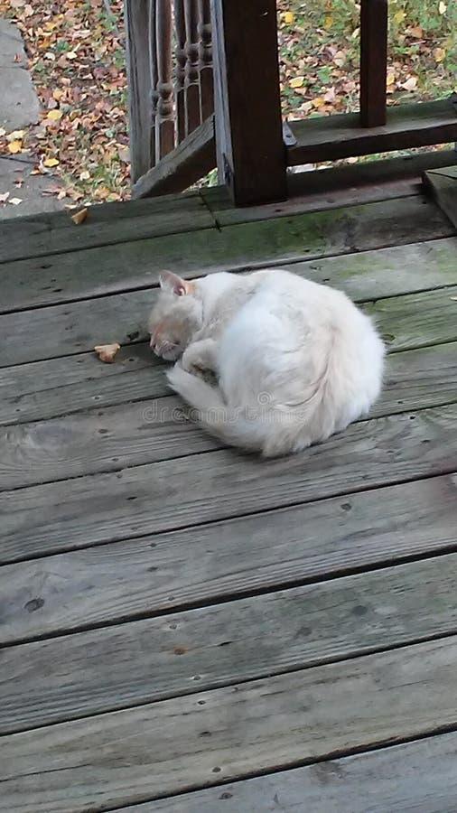 Gatito lindo anaranjado imagenes de archivo