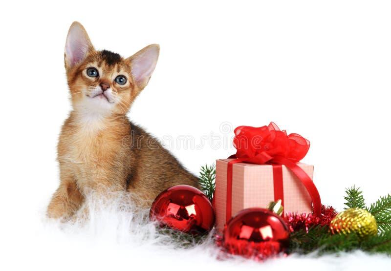 Gatito lindo con la caja del árbol de navidad y de regalo fotos de archivo libres de regalías