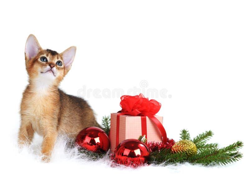 Gatito lindo con la caja del árbol de navidad y de regalo imagenes de archivo
