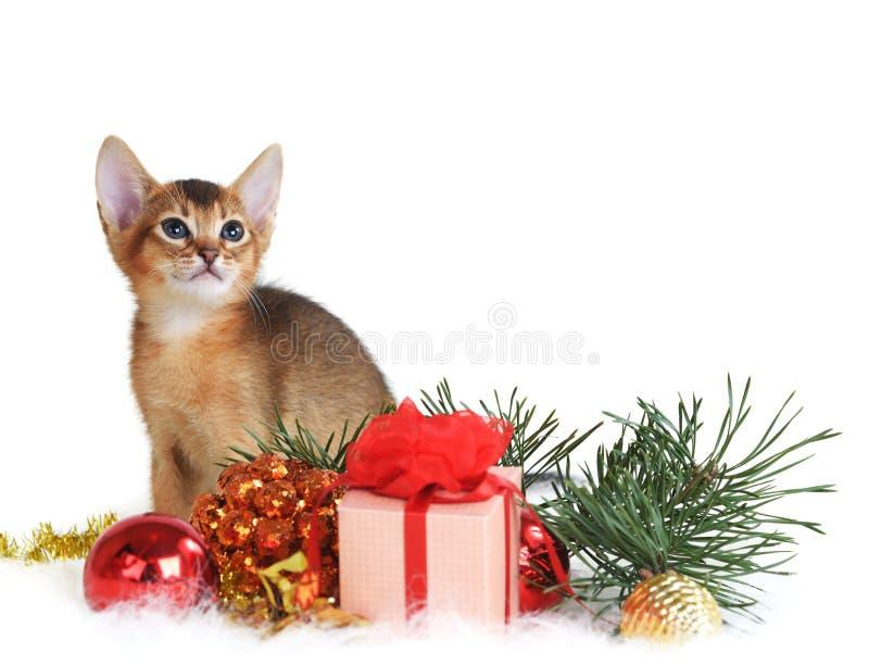Gatito lindo con la caja del árbol de navidad y de regalo fotografía de archivo libre de regalías