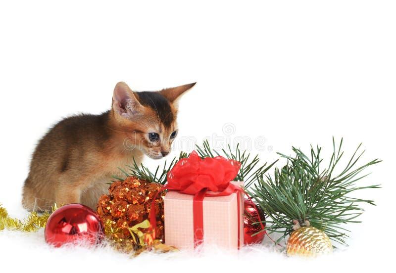 Gatito lindo con la caja del árbol de navidad y de regalo imágenes de archivo libres de regalías