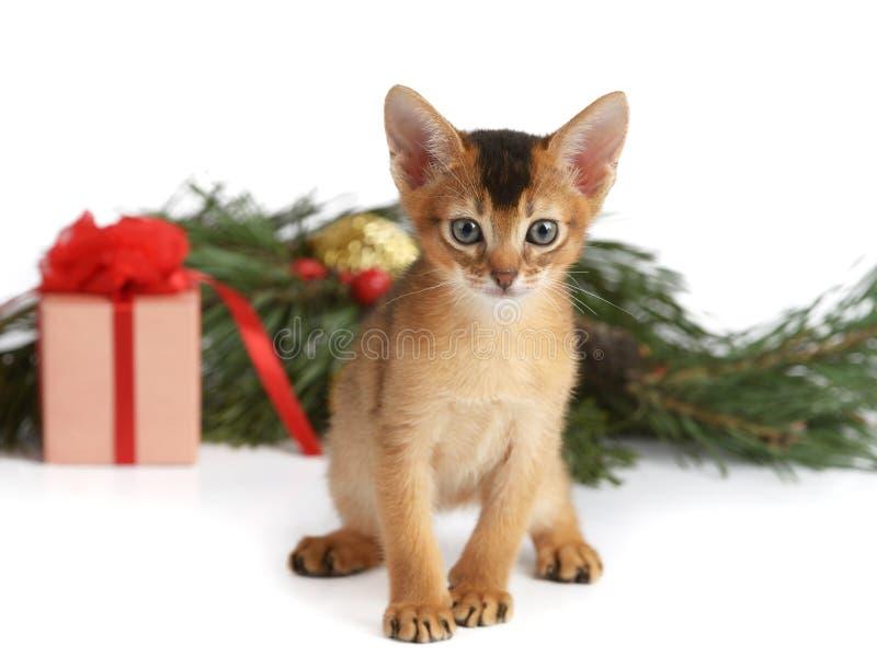 Gatito lindo con la caja del árbol de navidad y de regalo foto de archivo libre de regalías