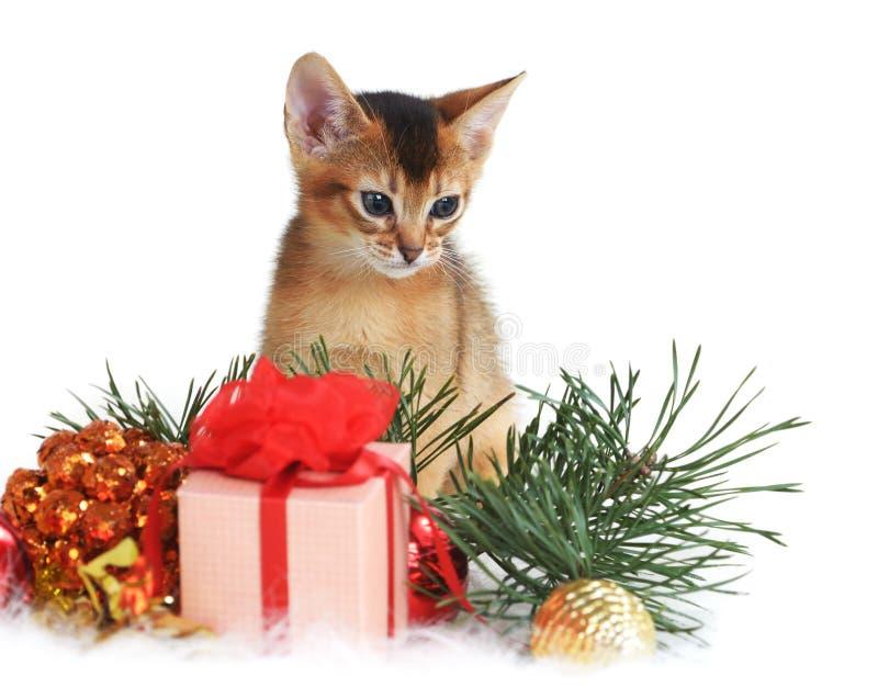 Gatito lindo con la caja del árbol de navidad y de regalo imagen de archivo