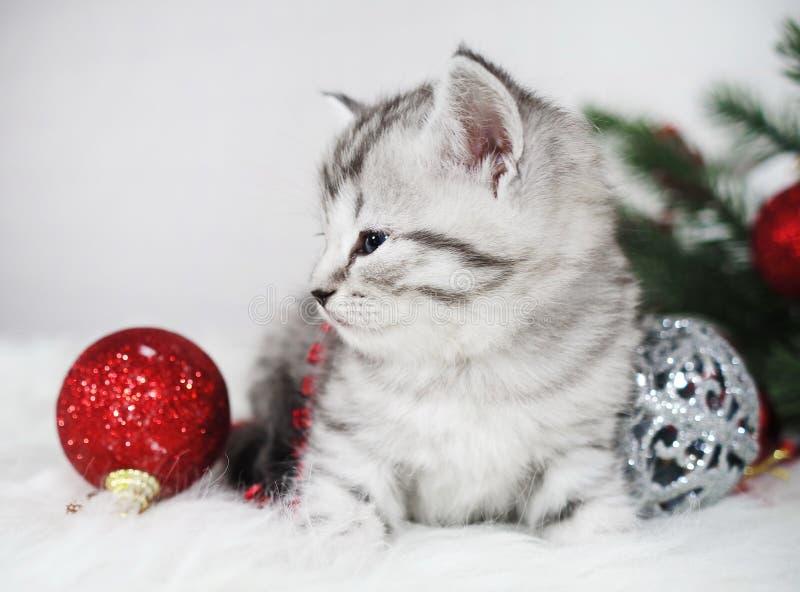 Gatito lindo del gato atigrado con una bola roja Gatito de la Navidad imagen de archivo libre de regalías