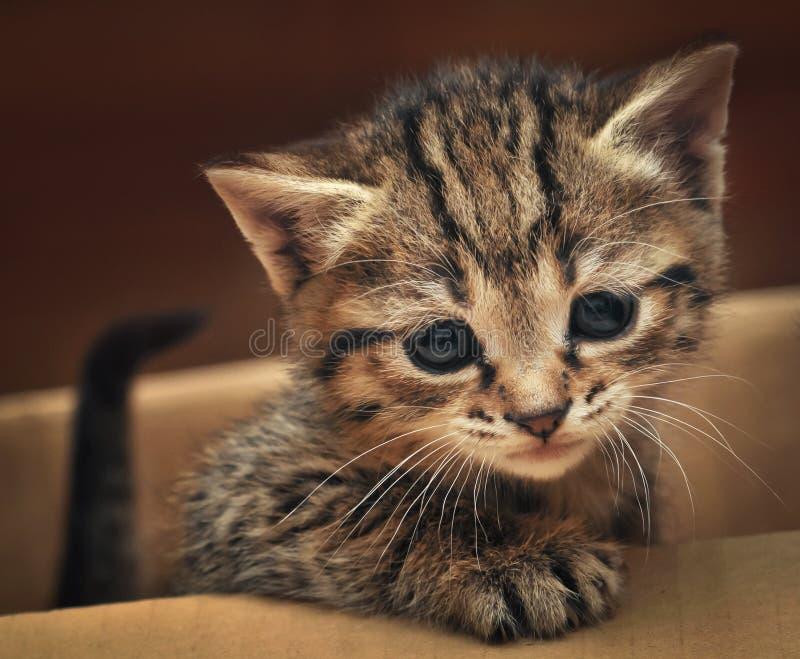 Gatito lindo del gato atigrado en la caja imagen de archivo