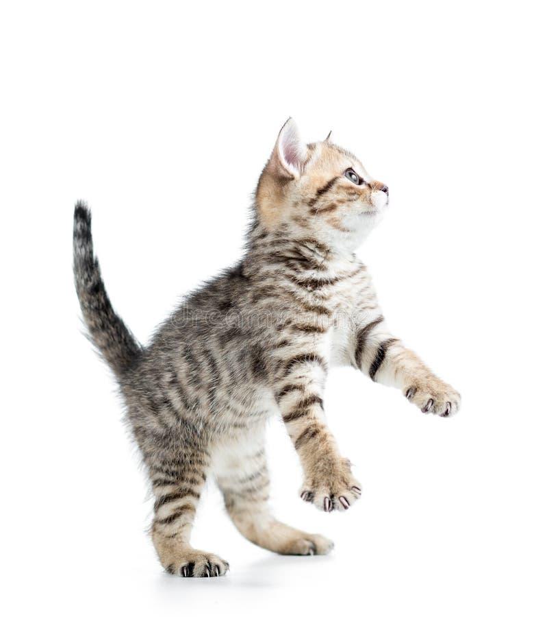 Gatito lindo divertido fotografía de archivo libre de regalías