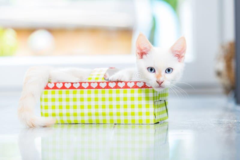 Gatito lindo en caja del día de fiesta imagen de archivo