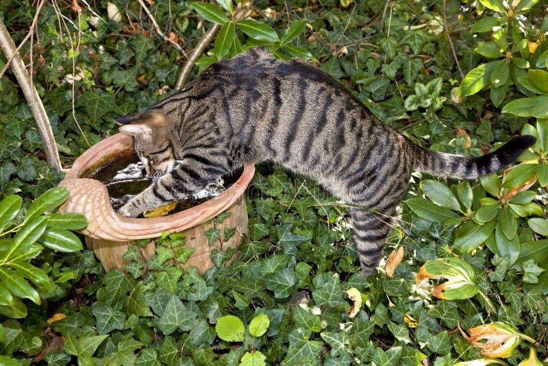 Gatito lindo en el jardín imagenes de archivo