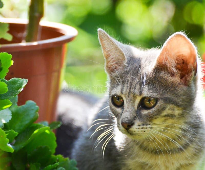 Gatito lindo en jardín imágenes de archivo libres de regalías
