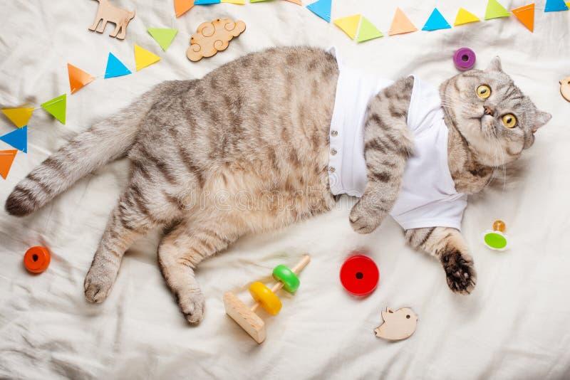 Gatito lindo, en un fondo ligero con los juguetes de los niños, y un pacificador Publicidad de la imagen para las tiendas del ani imagen de archivo libre de regalías