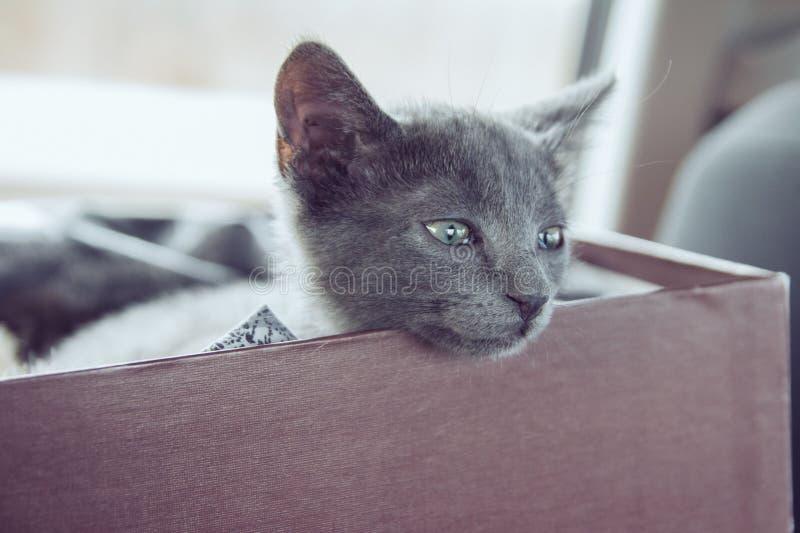 Gatito lindo en un rectángulo foto de archivo libre de regalías