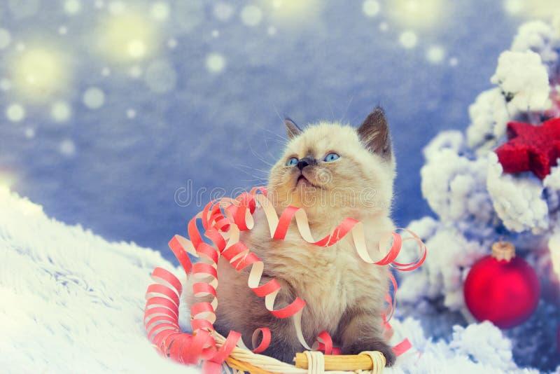 Gatito lindo enredado en flámula de la Navidad foto de archivo libre de regalías