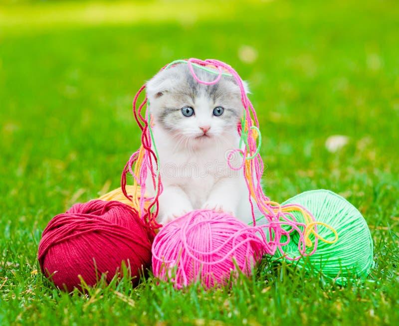 Gatito lindo que juega con los ovillos del hilo en hierba verde imágenes de archivo libres de regalías