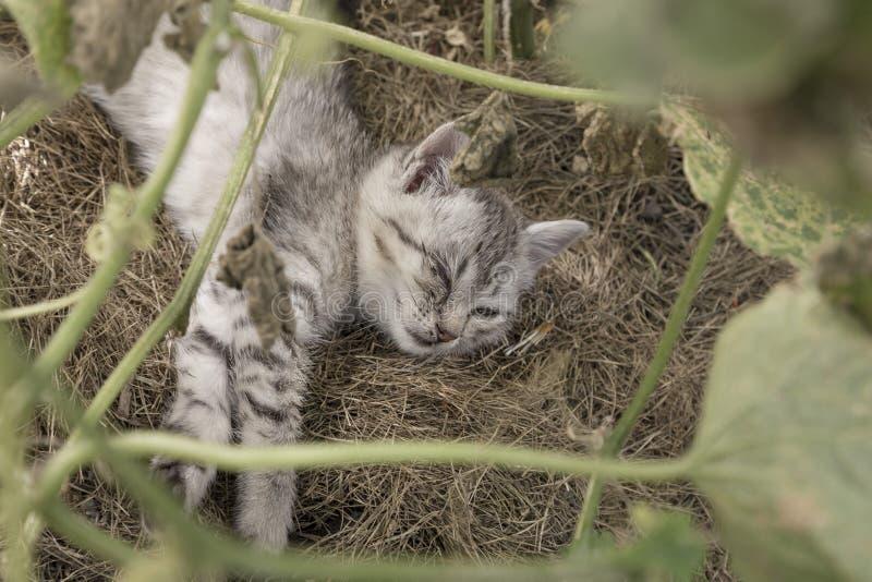 Gatito lindo que tiene conjuntivitis, mintiendo en la tierra en el jardín imágenes de archivo libres de regalías