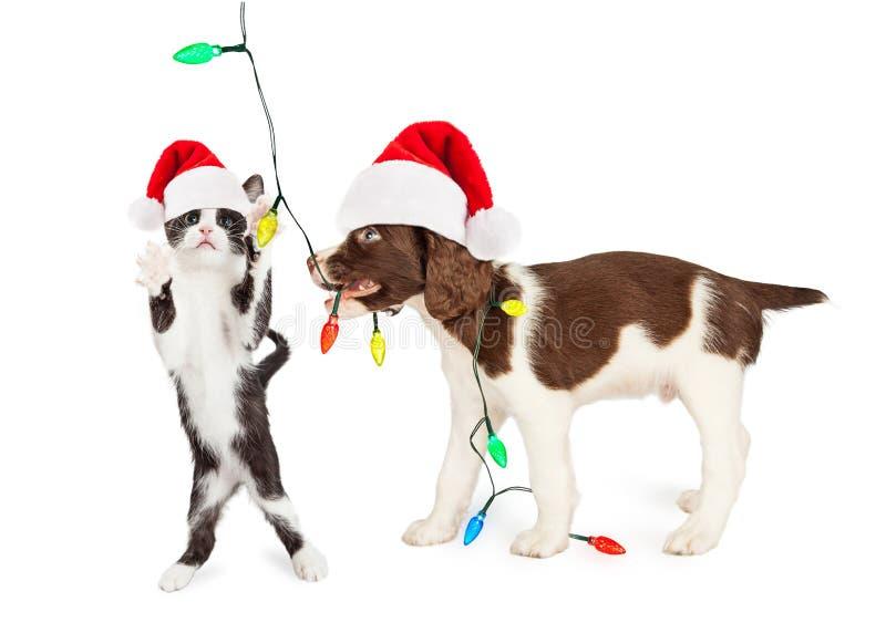 Gatito lindo y perrito que juegan con las luces de la Navidad imagen de archivo libre de regalías