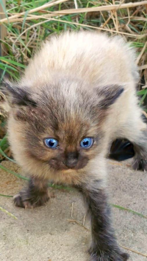 Gatito listo para pegar fotografía de archivo