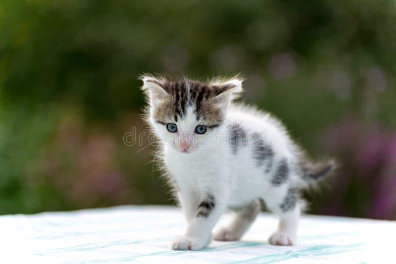 Gatito manchado que se coloca en la tabla en el jardín fotografía de archivo