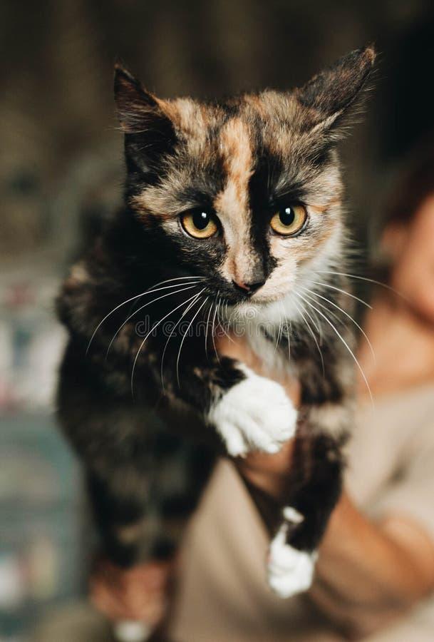 Gatito mestizo en las manos imagenes de archivo