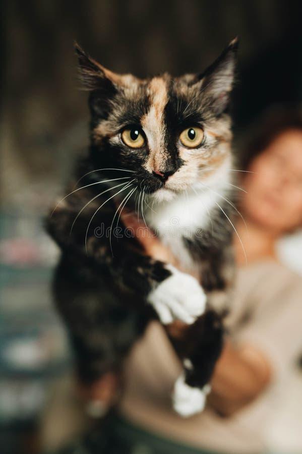 Gatito mestizo en las manos foto de archivo