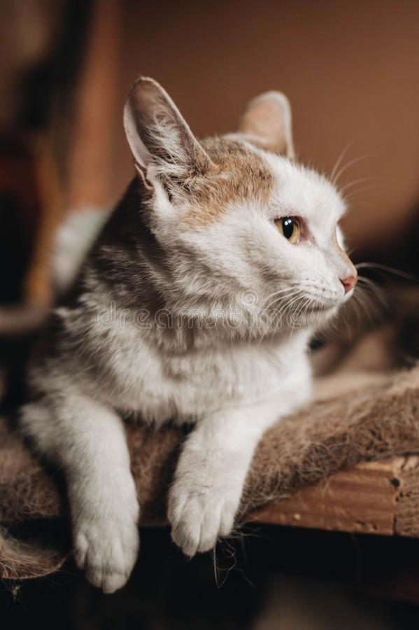 Gatito mestizo en las manos imagen de archivo libre de regalías