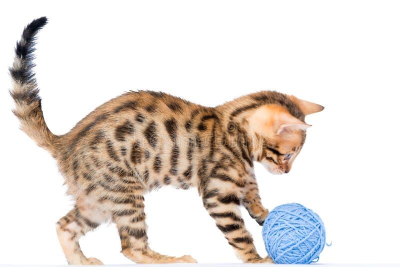 Gatito mullido de Bengala con la bola azul del hilo fotografía de archivo