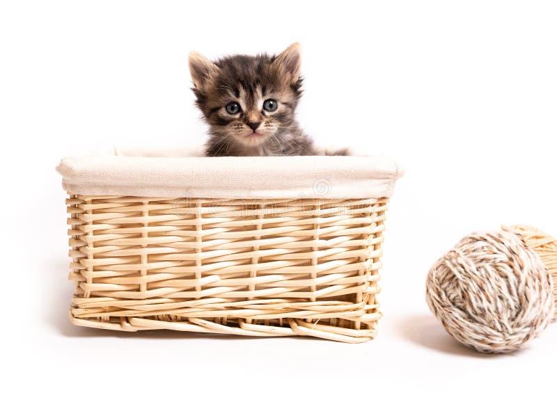 Gatito mullido en una cesta imagenes de archivo
