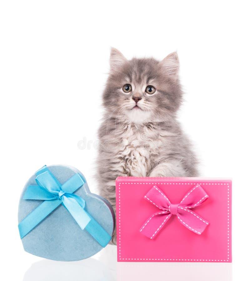 Gatito mullido lindo imagen de archivo libre de regalías