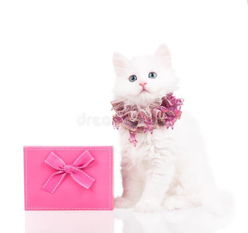 Gatito mullido lindo fotografía de archivo