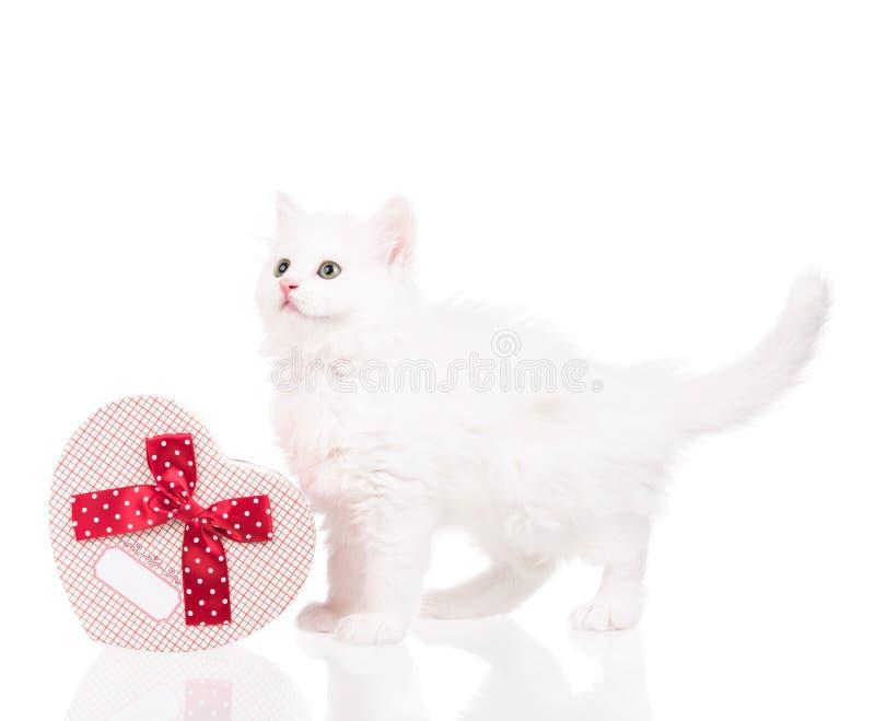 Gatito mullido lindo imagen de archivo