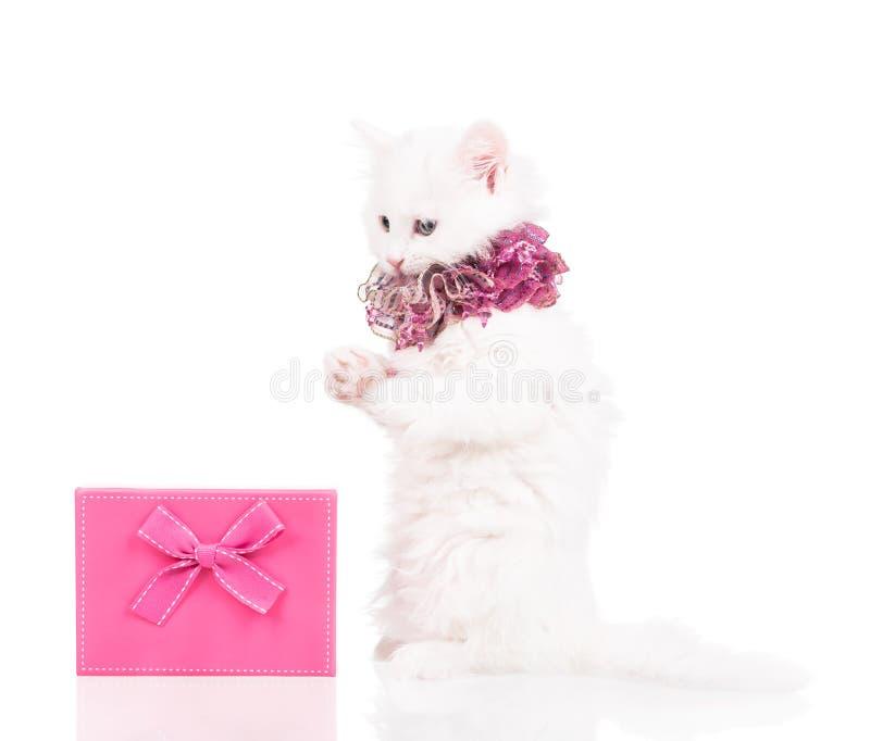 Gatito mullido lindo foto de archivo