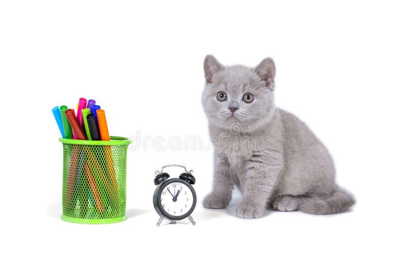 Gatito mullido púrpura encantador que se sienta al lado del reloj, lápices De nuevo a escuela imagen de archivo libre de regalías