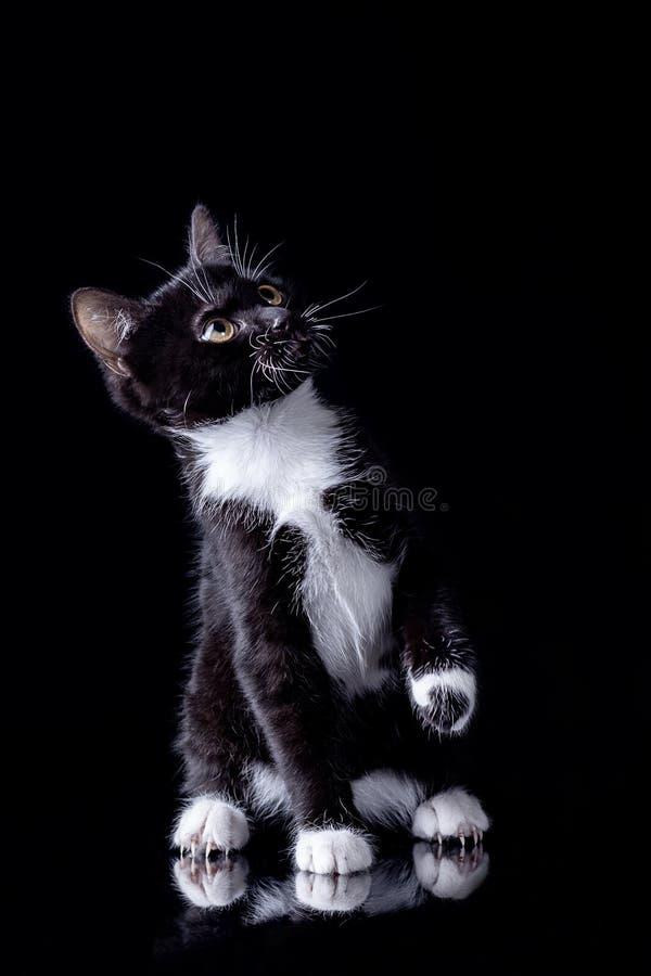 Gatito negro con el pecho blanco imagen de archivo libre de regalías