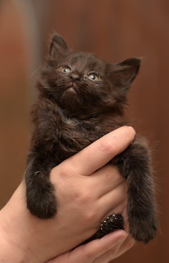 Gatito negro en manos imagen de archivo