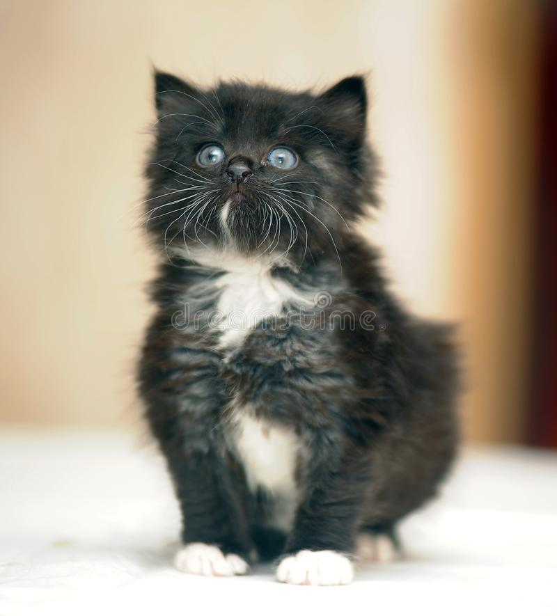 gatito negro regordete mullido lindo imagen de archivo
