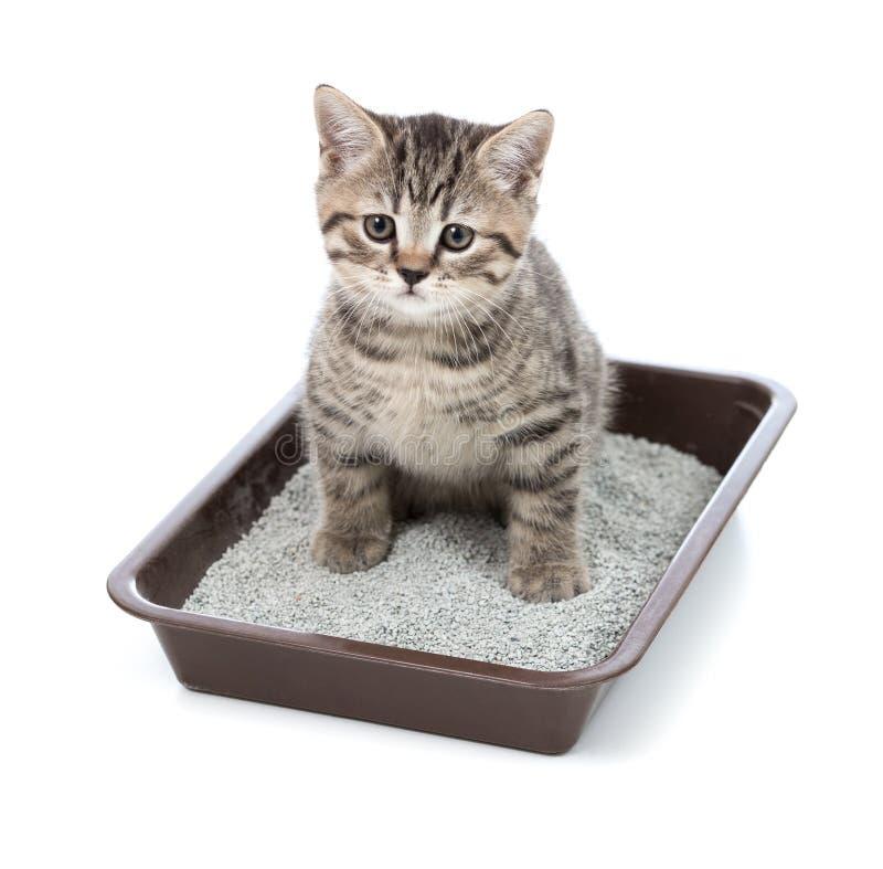 Gatito o pequeño gato en caja de la bandeja del retrete con la litera imágenes de archivo libres de regalías