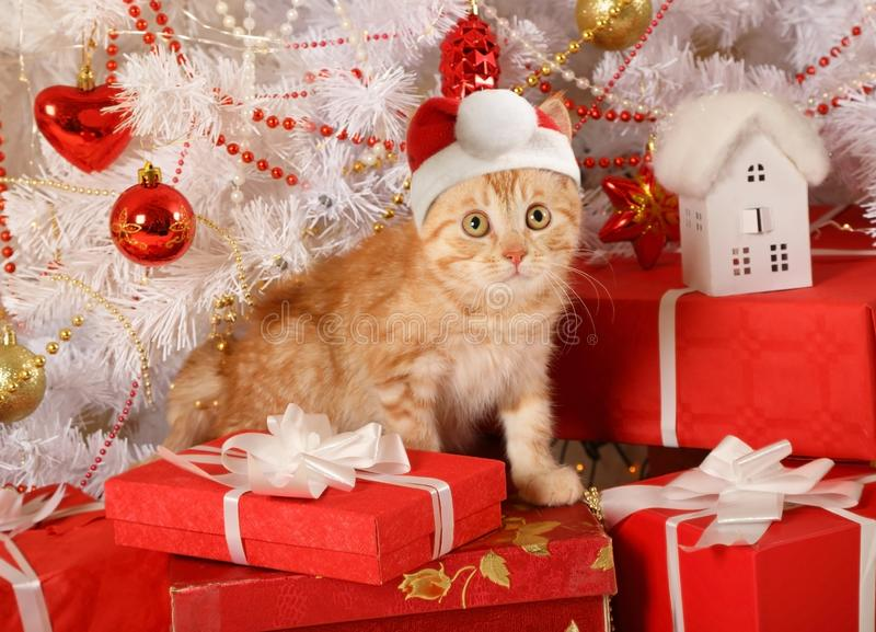Gatito pelirrojo lindo en un sombrero de Santa Claus imagenes de archivo