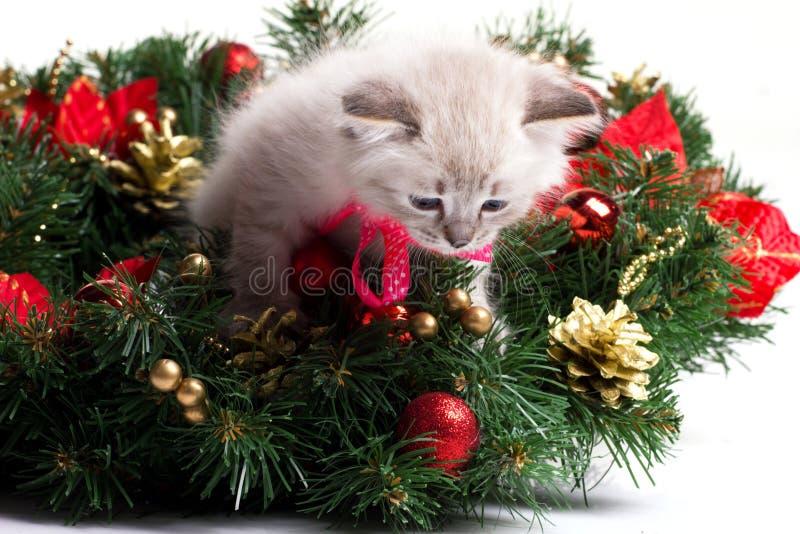 Gatito peludo en árbol de Navidad imágenes de archivo libres de regalías
