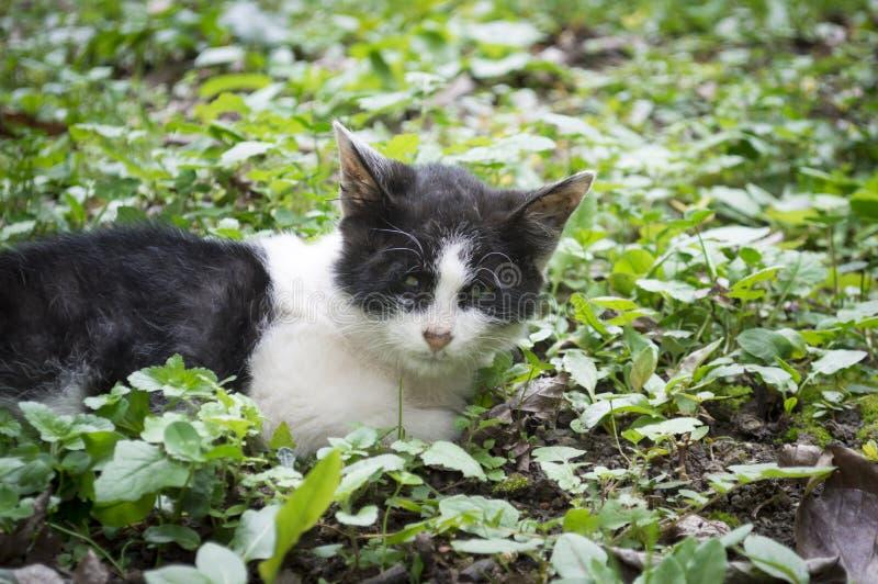 Gatito perdido lastimado solo fotos de archivo