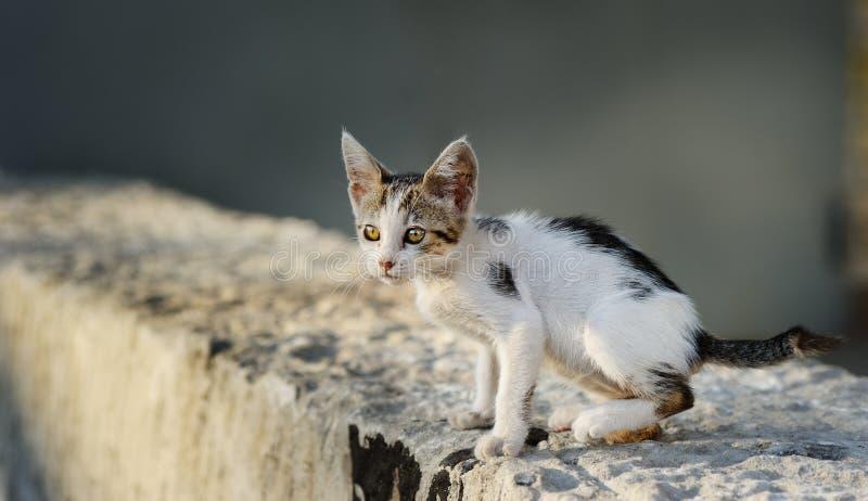 Gatito perdido lindo foto de archivo