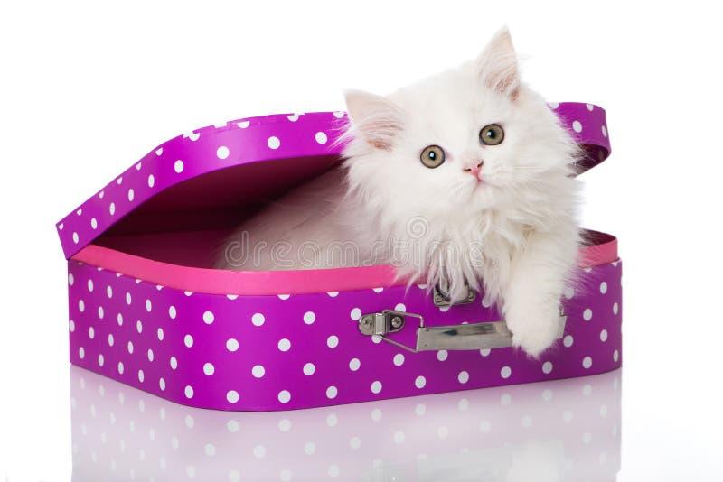 Gatito persa que se sienta en una maleta en el fondo blanco imagen de archivo libre de regalías