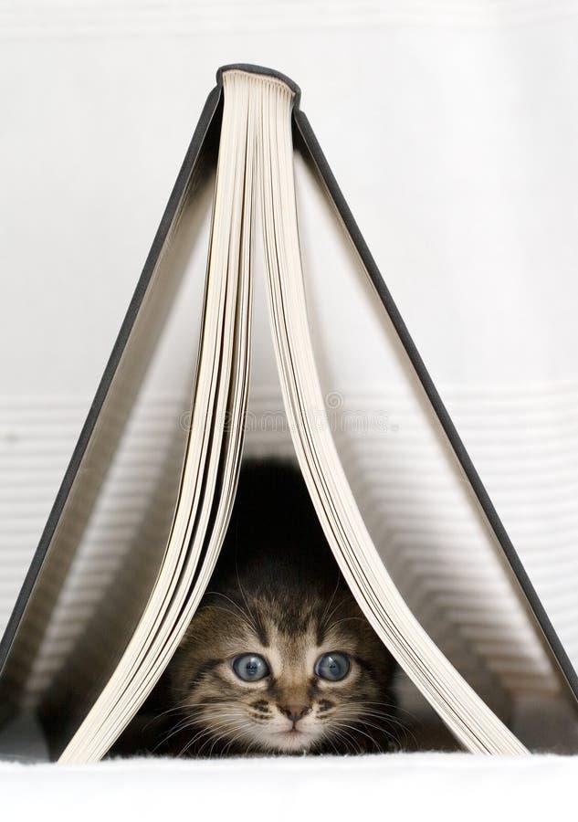 Gatito por debajo el libro fotografía de archivo